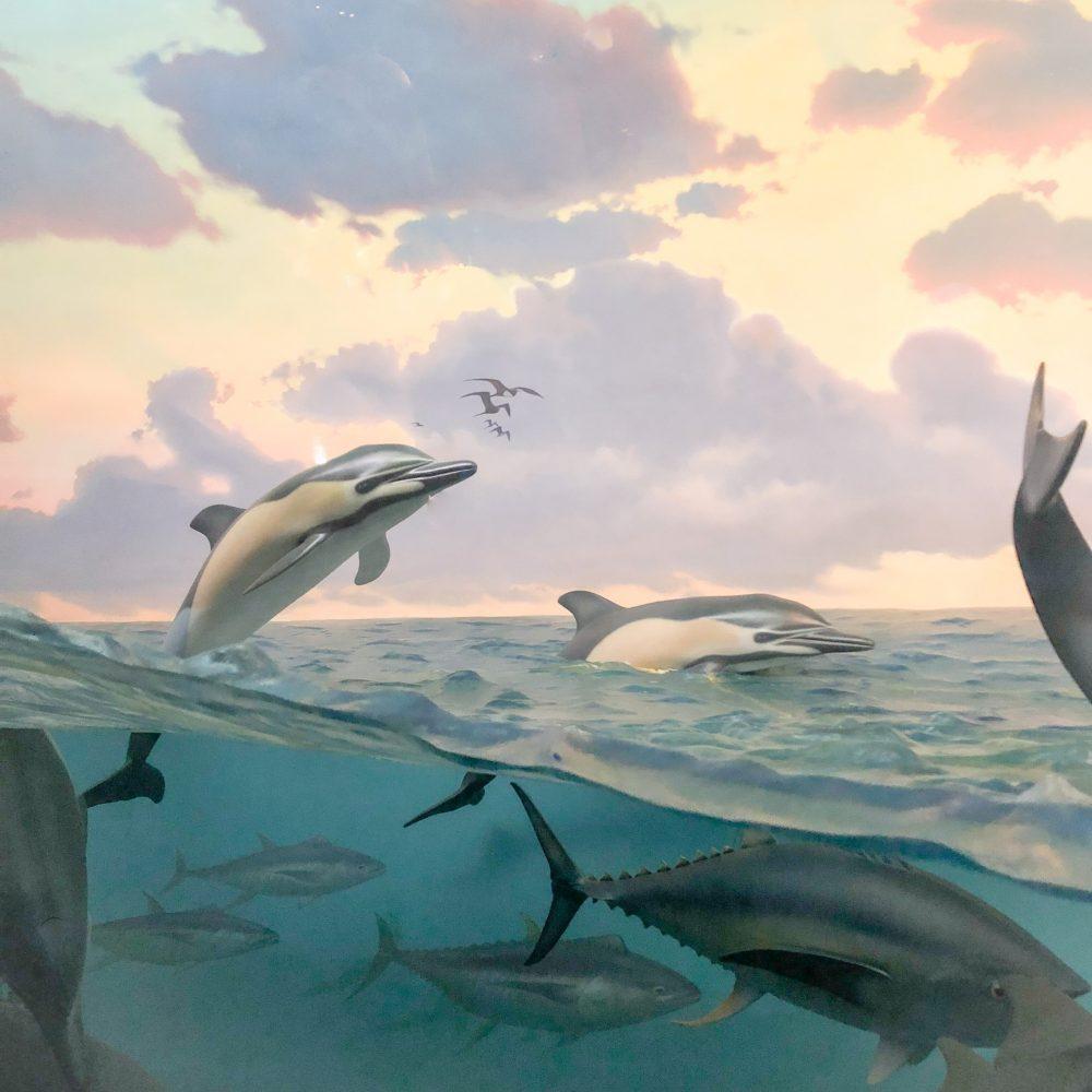Im Naturkundemuseum: Diorama mit Delphinen und Thunfischen